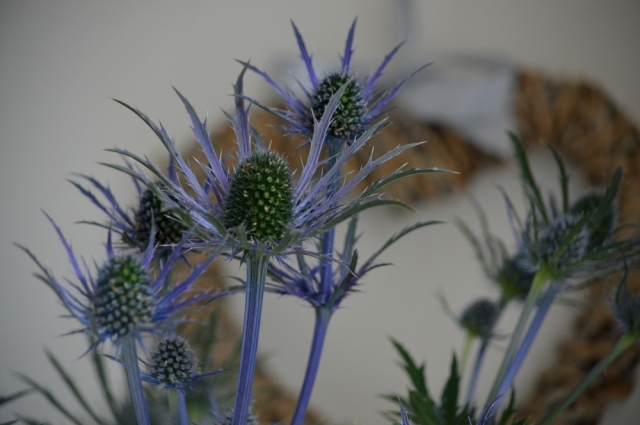 thistle 8754a